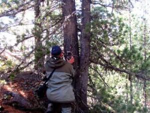 Установка фотоловушки в лесу
