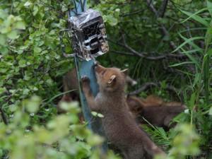 Купить фотоловушку для охоты