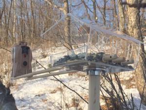 Фотоловушка для съемки птиц