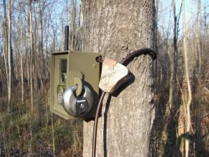 Фотоловушка - отличный помощник в лесу